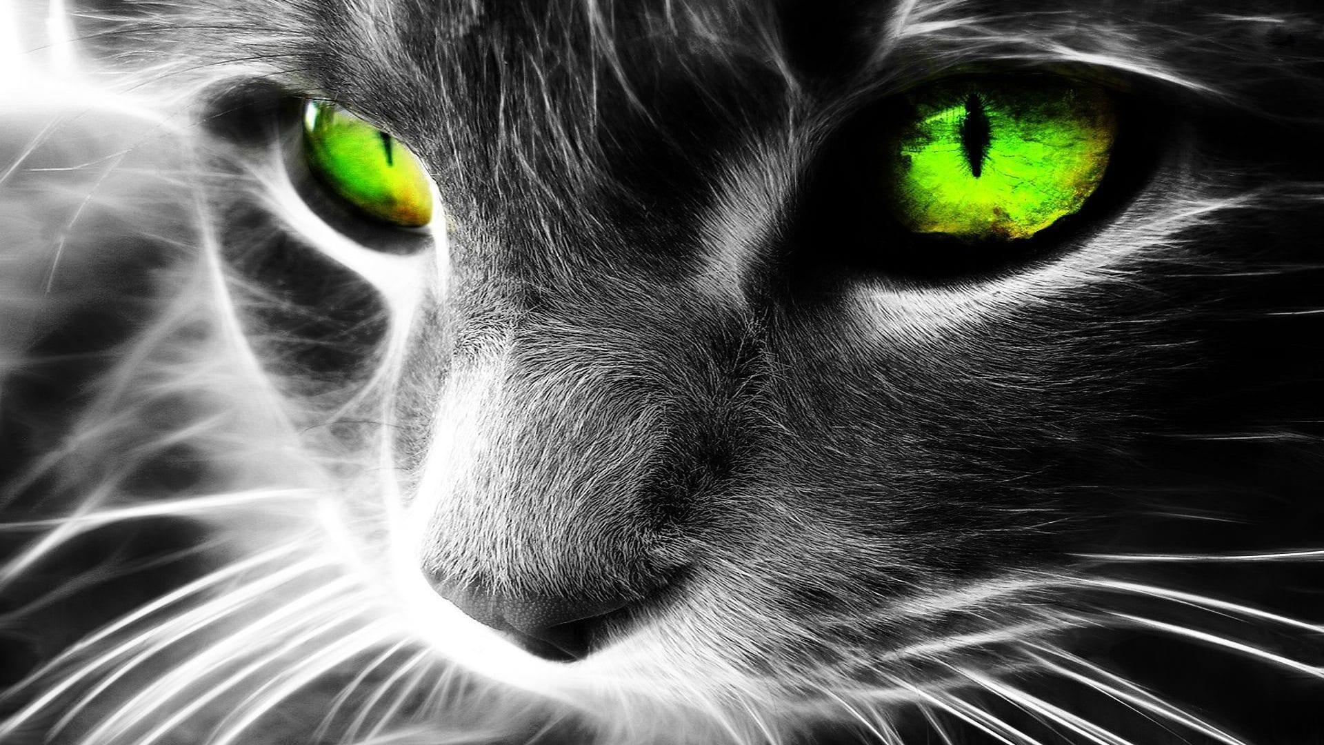 1080p-hd-wallpaper-animals-cats