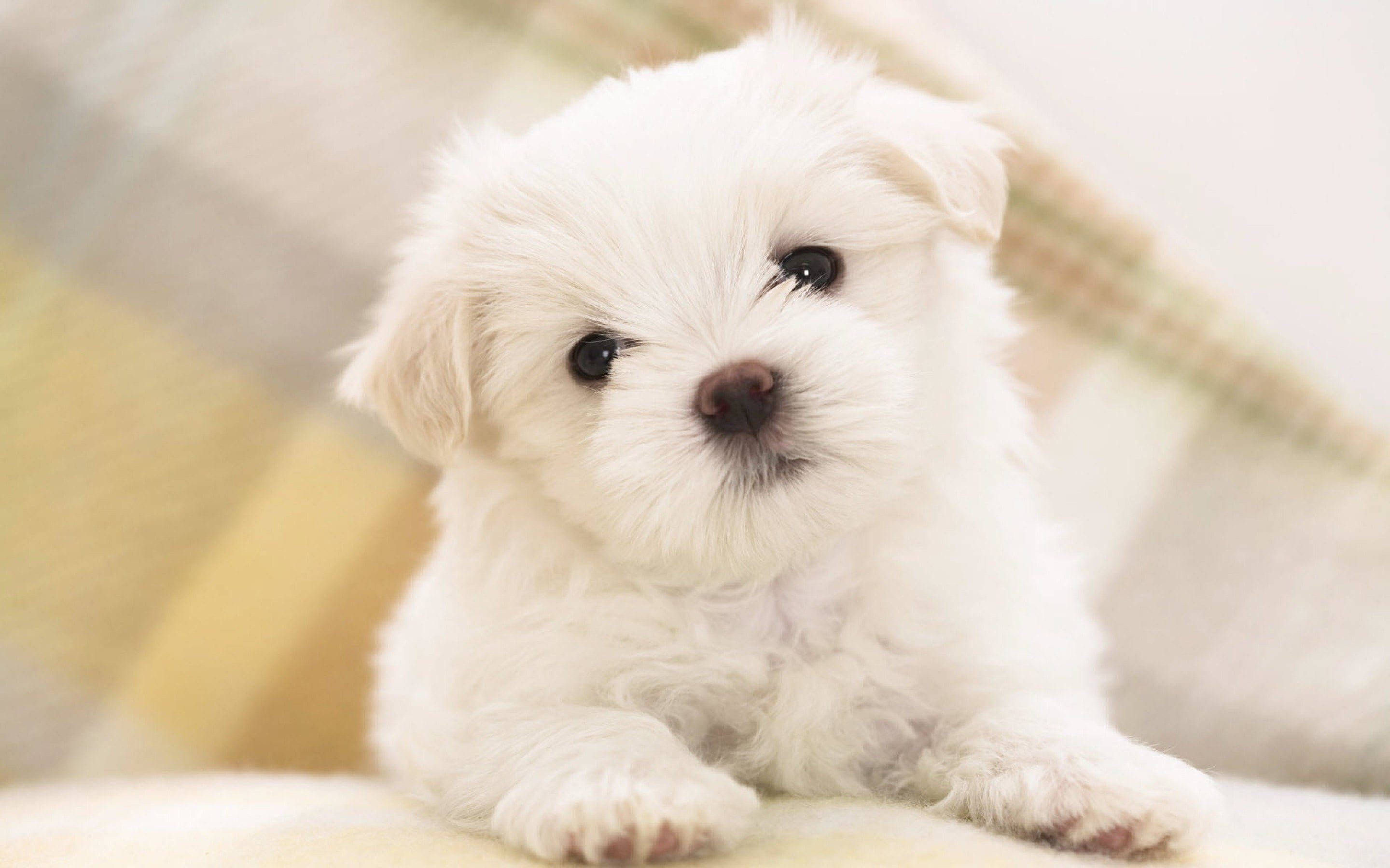 free-cute-puppy-images-dowload