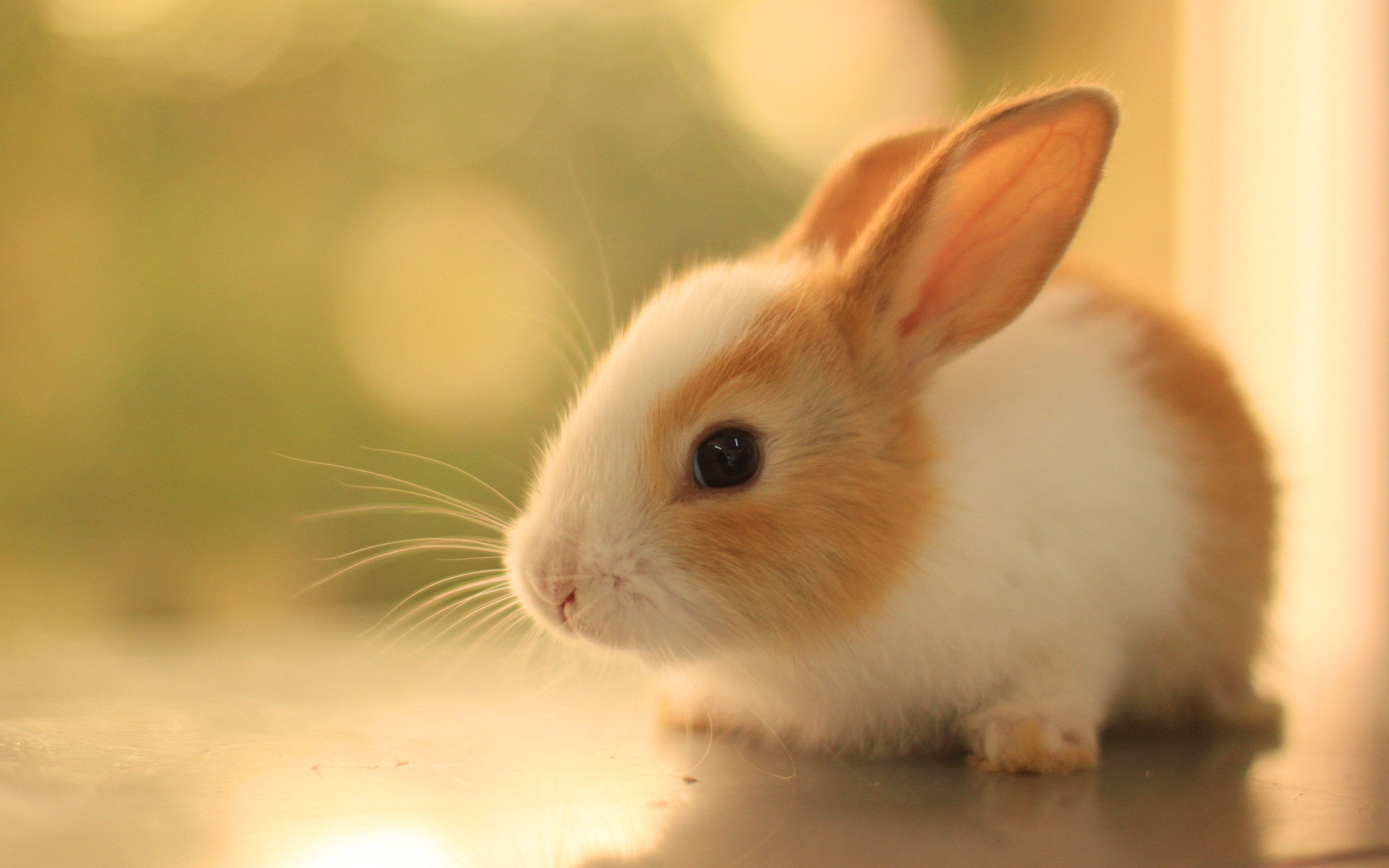 Cute-Baby-Bunny-HD-Wallpapers