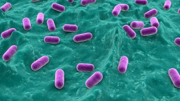 Modifying-microbial-fermentation-conditions-can-improve-probiotic-survival_strict_xxl