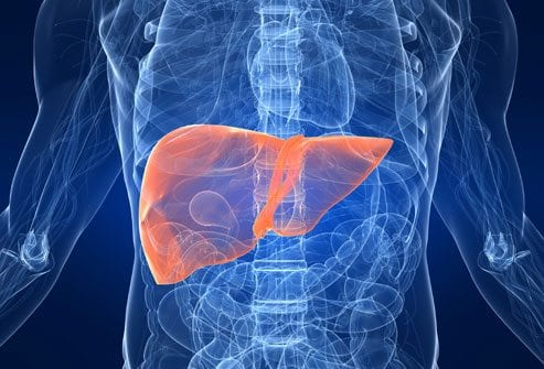 getty_rf_photo_of_liver_in_body_illustration