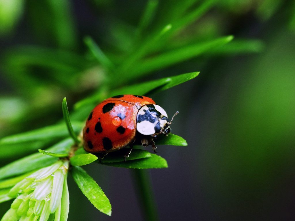 1024x768-insects-ladybug-bugs-green-nature-desktop-hd-wallpaper