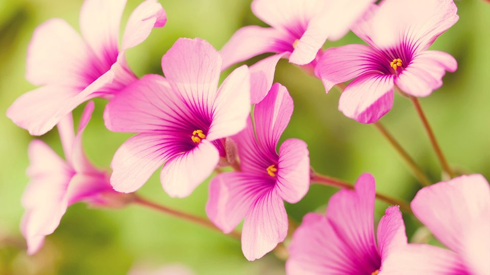 6854384-spring-flower-pictures