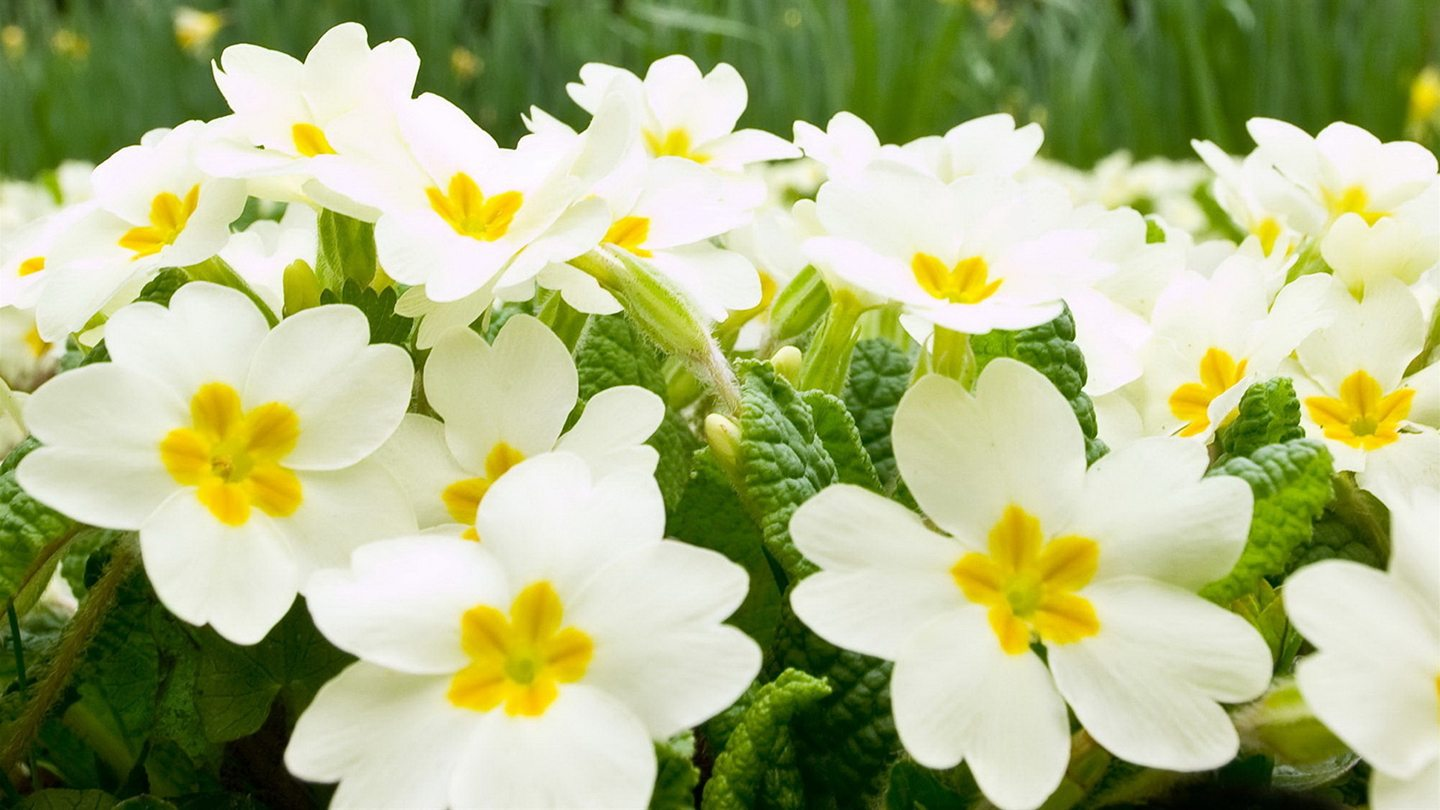 6892514-white-flowers