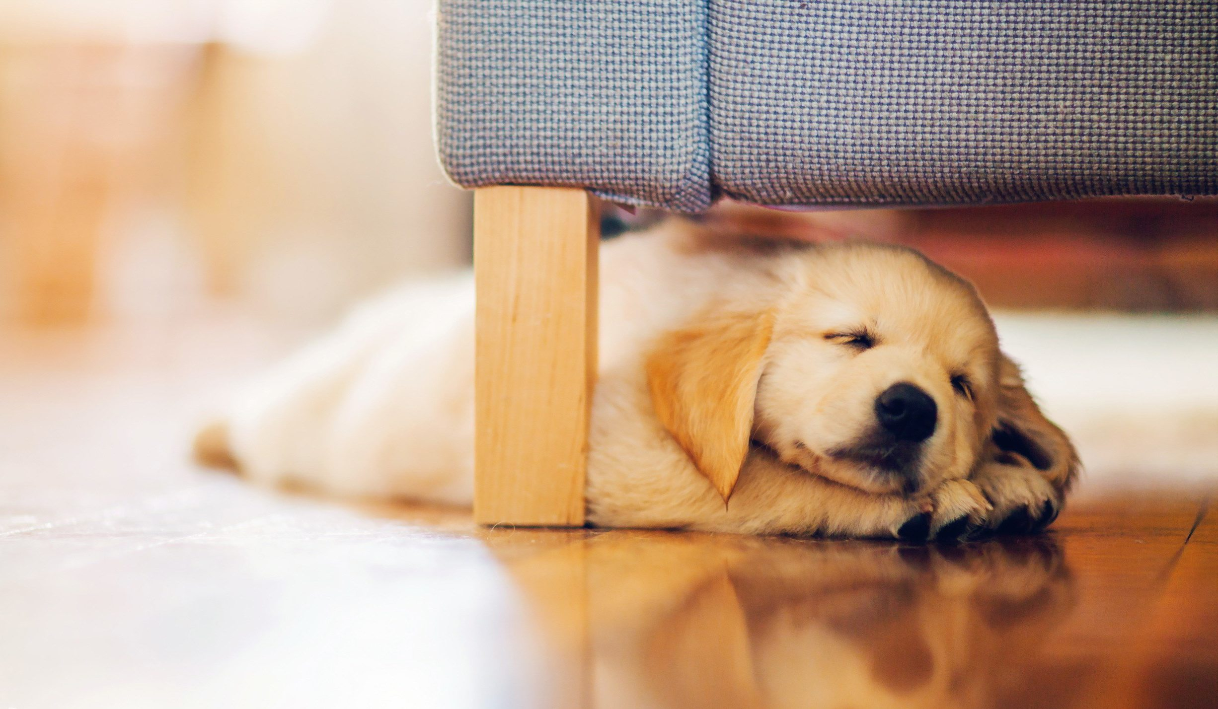 6959055-dog-puppy-retriever
