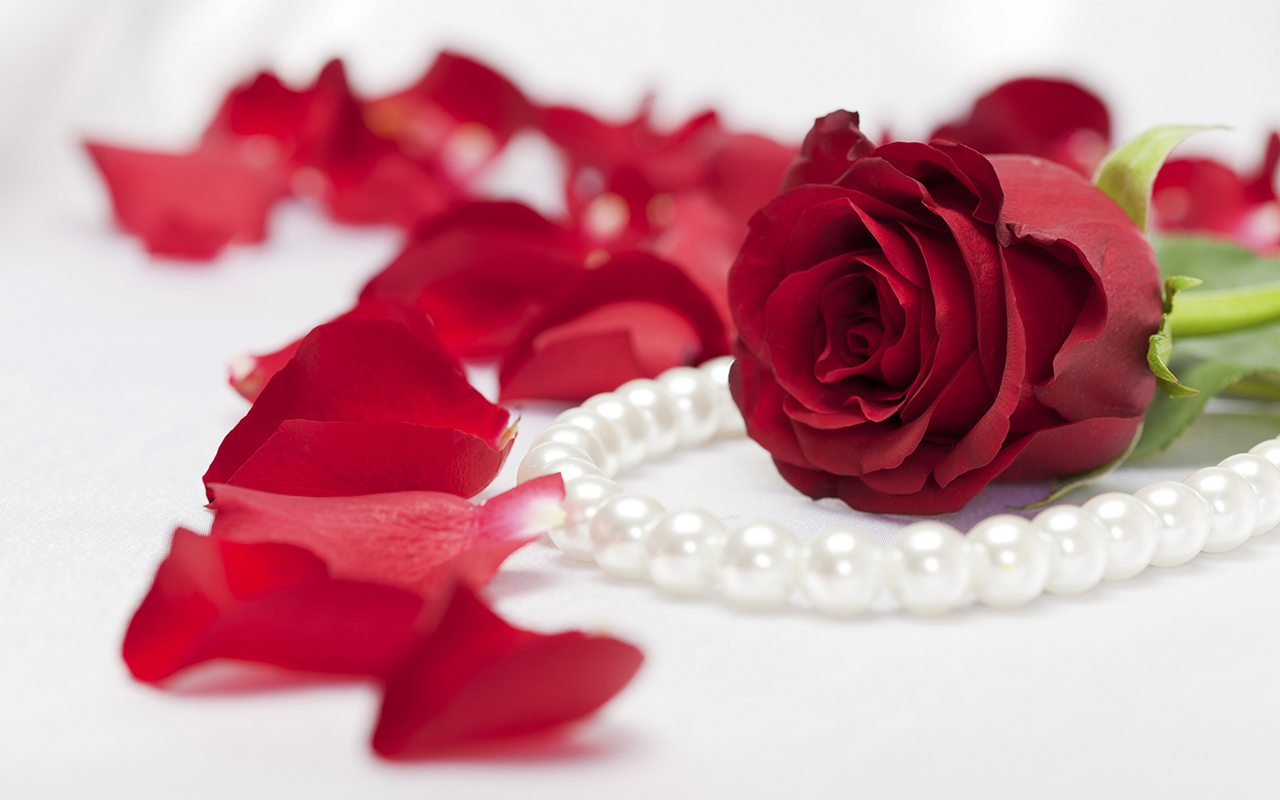 Red rose with a string of white pearls and pettals on white satin background, great for Valentine's Day
