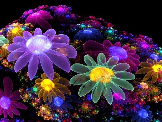 Colourful-Flowers-bright-colors-17227068-550-413
