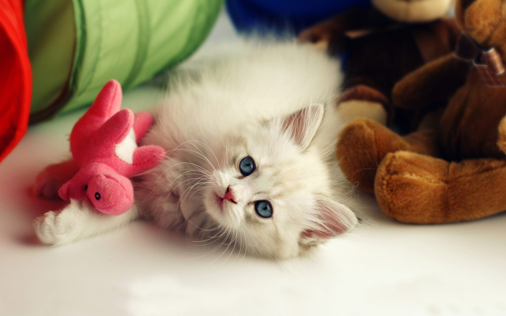 Cute-Pets-Mac-HD-Wallpapers-With-My-Little-Cat