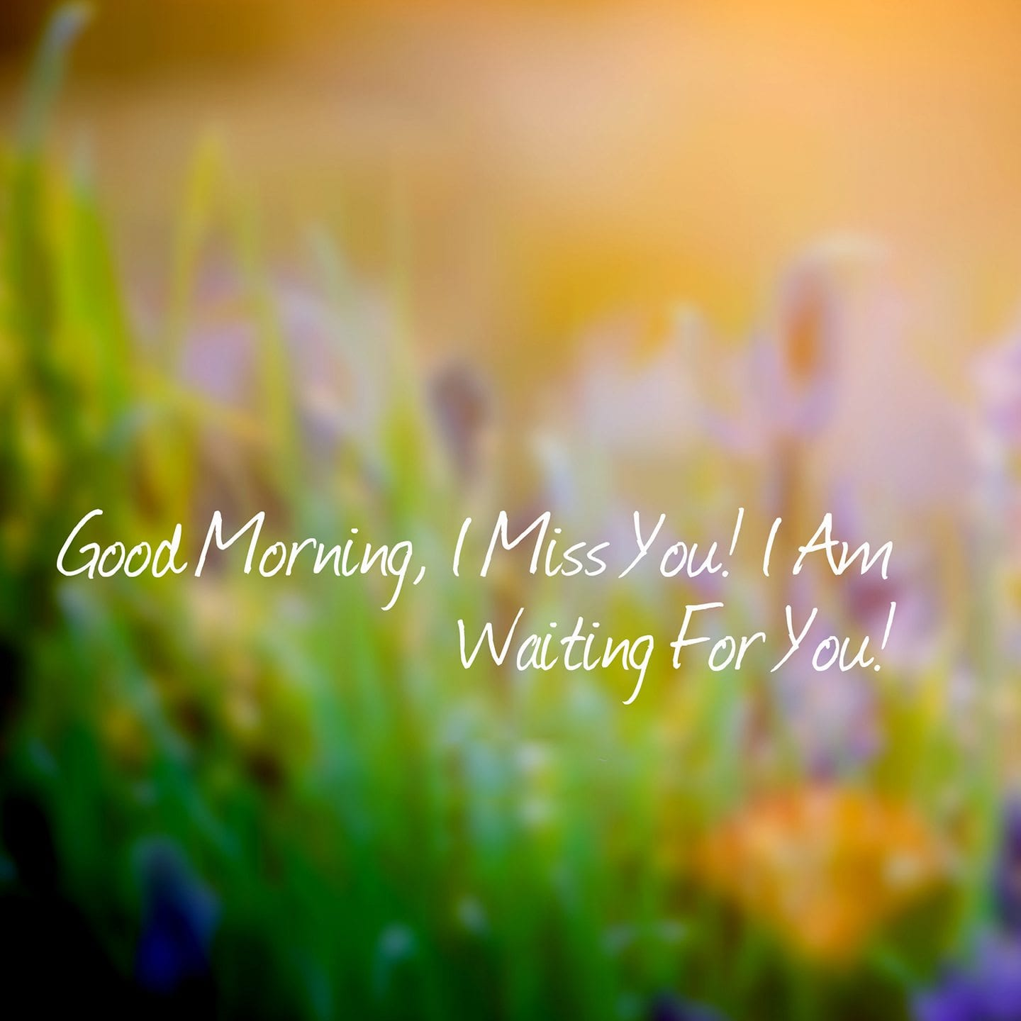 Good-Morning-I-Miss-You-I-Am-Waiting-For-You1