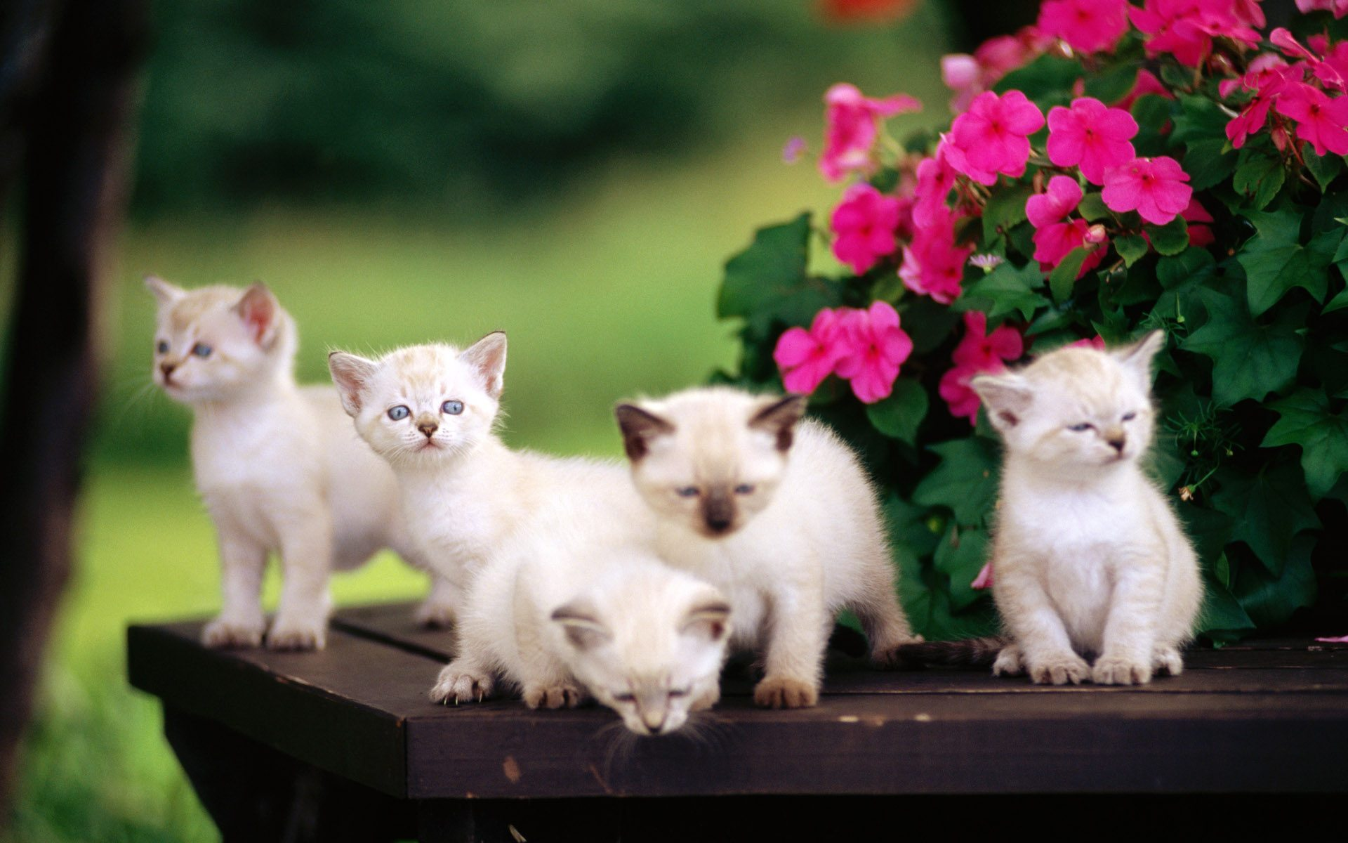 baby-cats-pics-cute