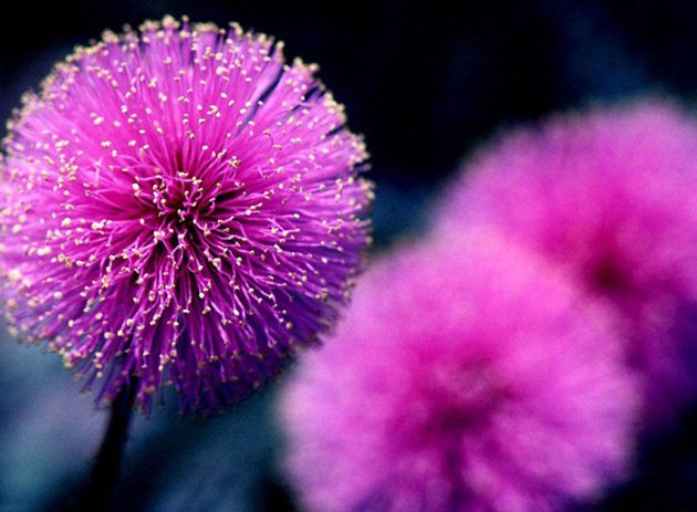 beautiful-flower-photos-1