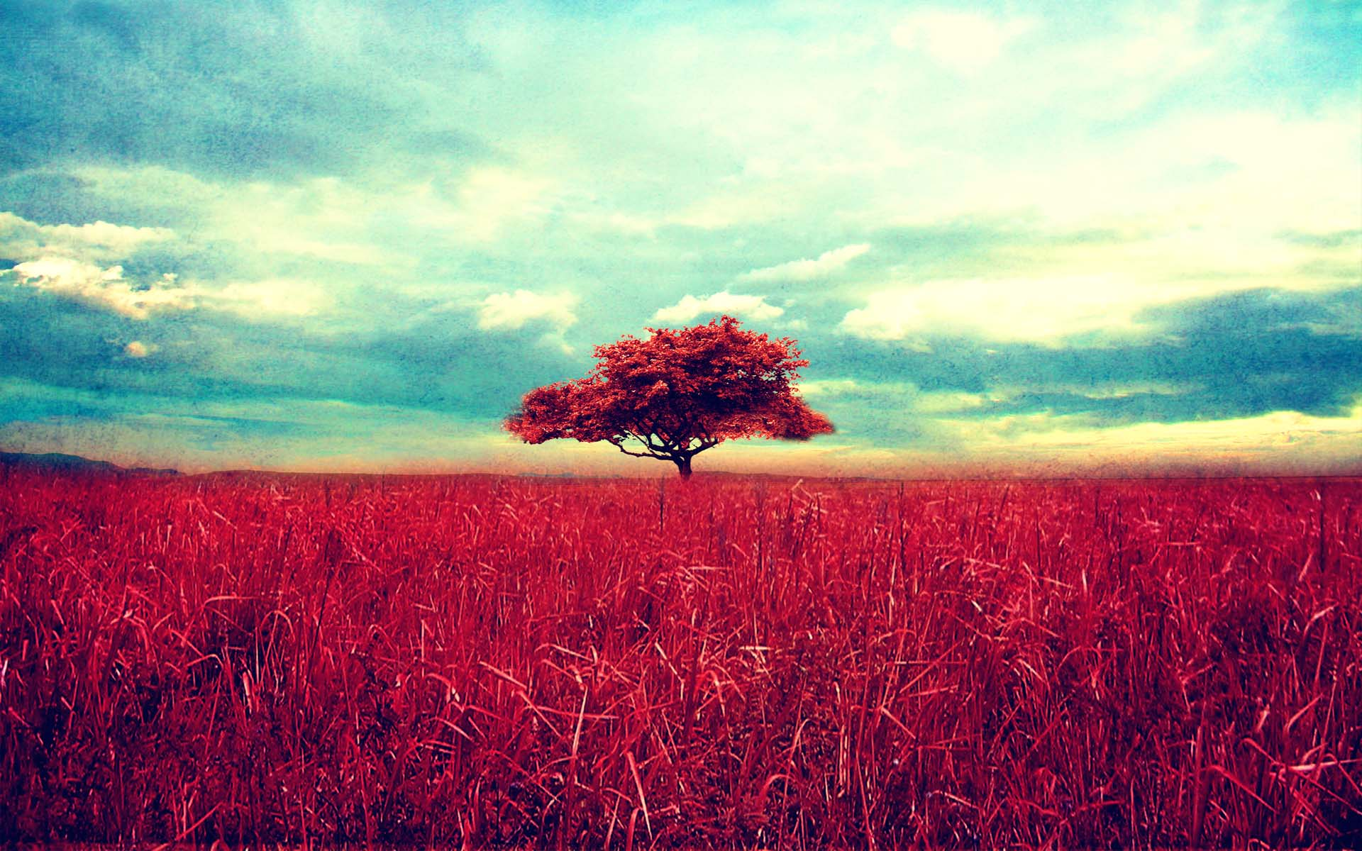 beautiful-red-tree-scene-wide-high-definition-wallpaper-download-red-tree-images-free