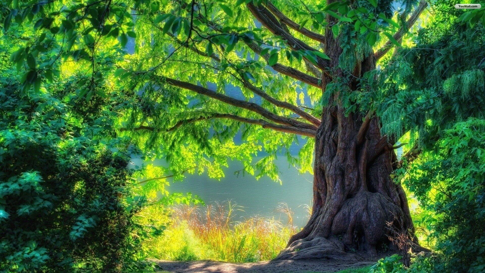 big-green-tree-wallpaper