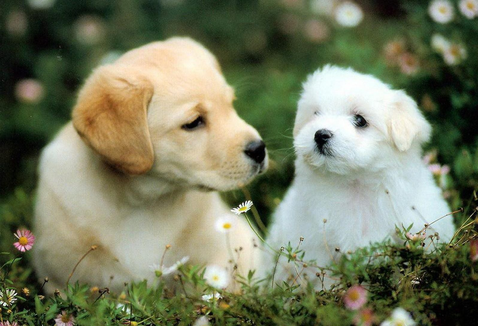 cute-puppies-jpg
