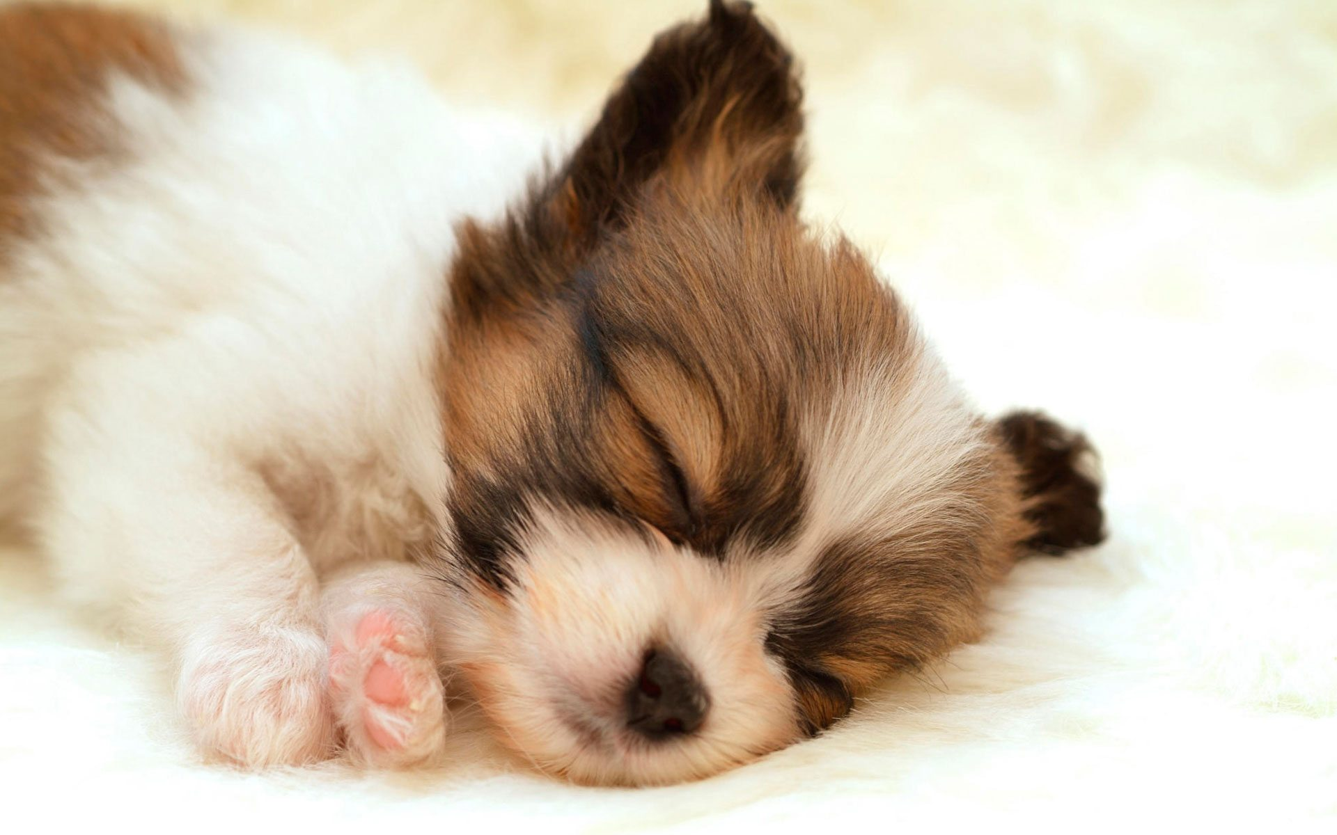 cute-puppies-photos-wallpaper