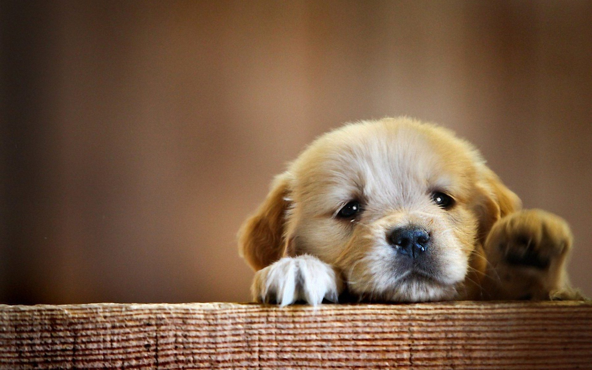 desktop-sad-dog-face-pics