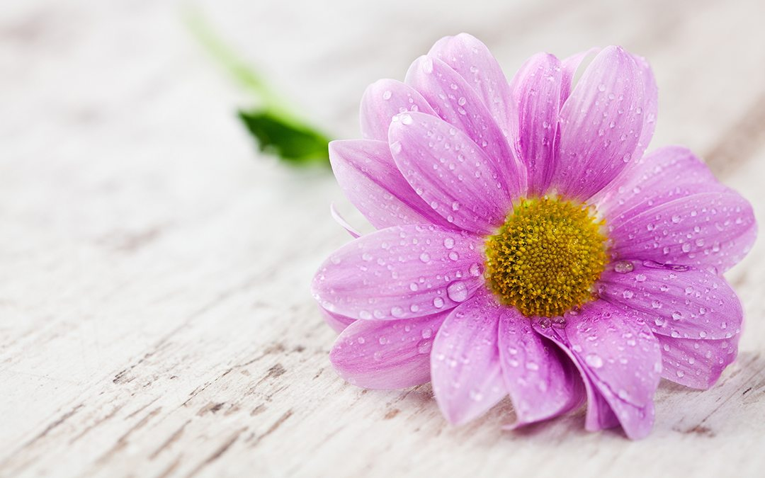 flower-wallpaper-1