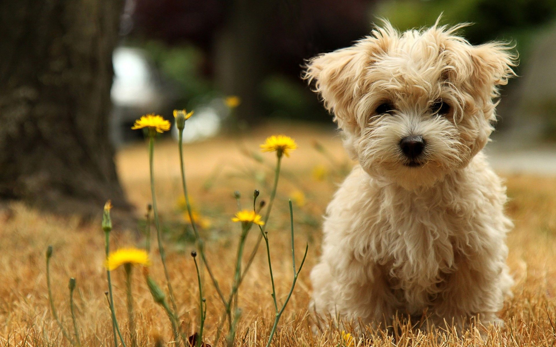 glamorous-cute-little-puppy-hd-wallpaper-puppy-wallpaper-hd-free-download-desktop-for-bedroom-doggy-wallpapers-border-ipad-mobile-ipod-touch