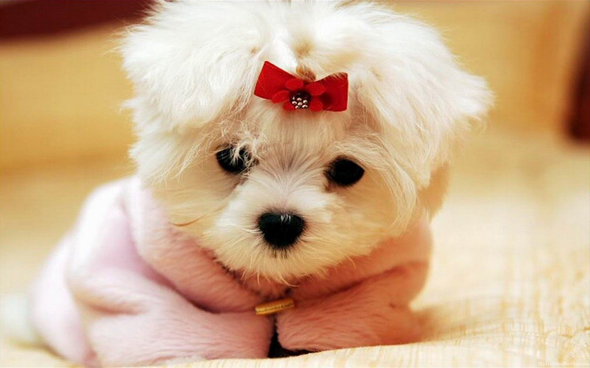 puppy-dogs-hd-desktop-wallpapers-pictures-24-puppy-dogs-hd