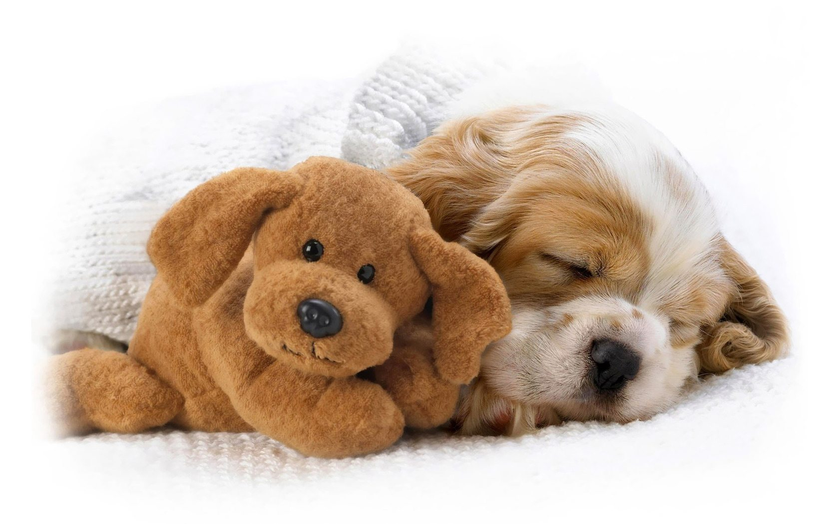 sleeping-puppy-wallpaper-animal-wallpapers-4894