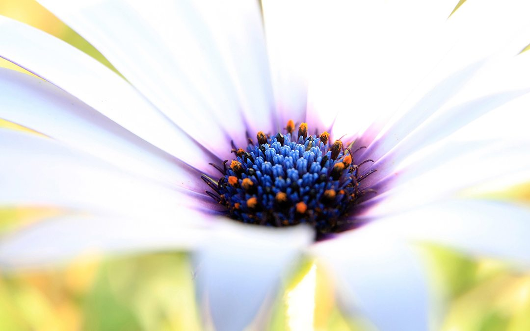 white_purple_flower-2560x1600
